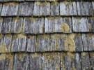 dirty cedar shingles1